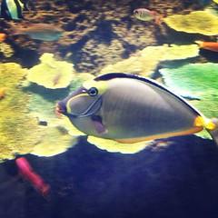 魚の顔展10