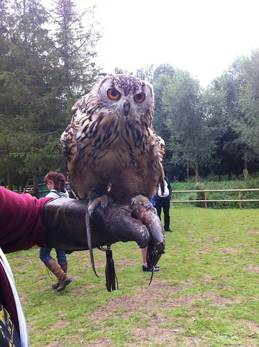 Lavenham Falconry Suffolk