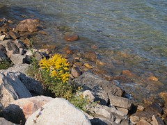 stream, flower, leaf, water, river, nature, tide pool, body of water, geology, shore, landscape, wilderness, rock,