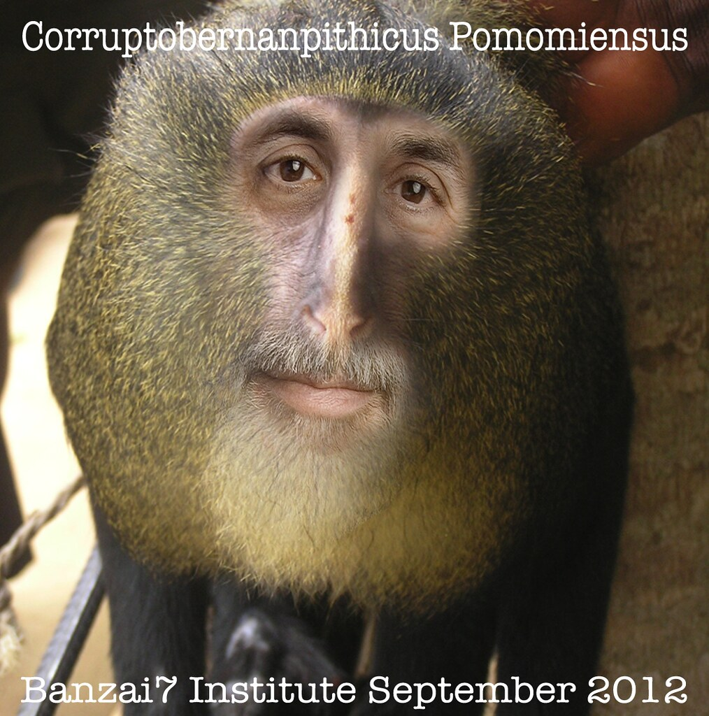 NEW SPECIES DISCOVERED: CORRUPTOBERNANPITHICUS POMOMIENSUS