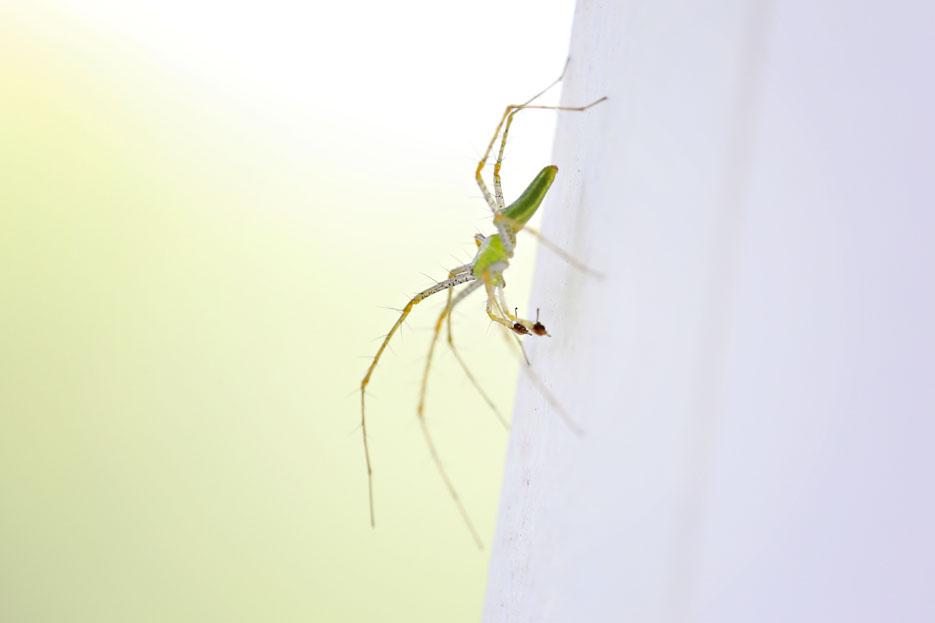 090112_06_bug_linxSpider2