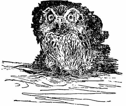 একটি ক্ষুদে পেঁচা ( Pygmy Owl)