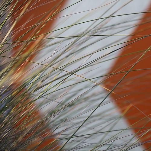 nature australia melbourne tallgrasses