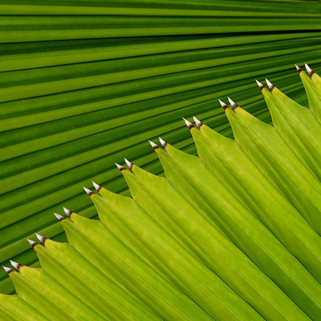IMG_6671 Palm Leaves