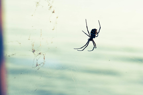 Spider with an ocean view.