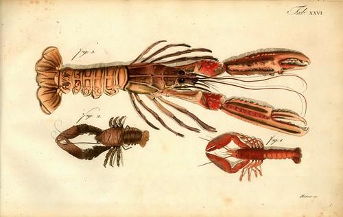 007-Â Versuch einer Naturgeschichte der Krabben und Krebse- 1790- Johann Friedrich Wilhelm Herbst- Humboldt University