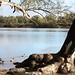 Small photo of Murray River, Mildura