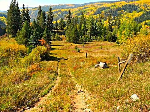 road dirtroads colorado rockymountains rockymountainhigh mountains autumn montanhas montagnes tigwanroad roads backcountry countryroads trees fall color leaves branches efterår φθινόπωρο herfst elotoño outono 秋 sonbahar foliage american coloresotoñales paysage lautomne colors colores paesaggio us america unitedstates landscape montanhasrochosas usa sandraleidholdt