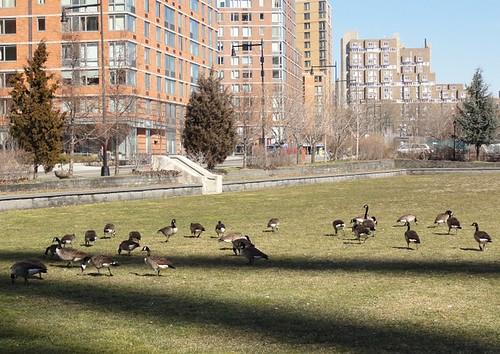 Park on Roosevelt Island