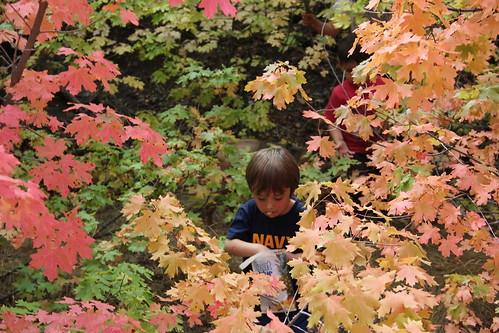 Olsen eating in the trees