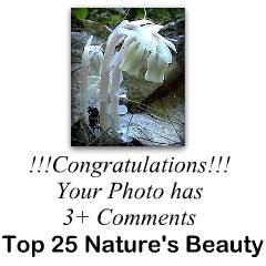 Top 25 Nature's Beauty