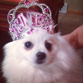 Good morning from Princess Daisy!!