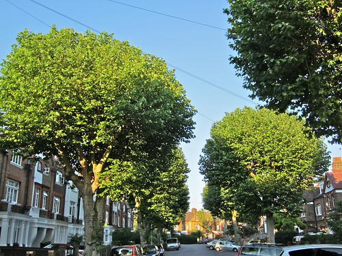 Trees on St. Margaret's Road, Brockley