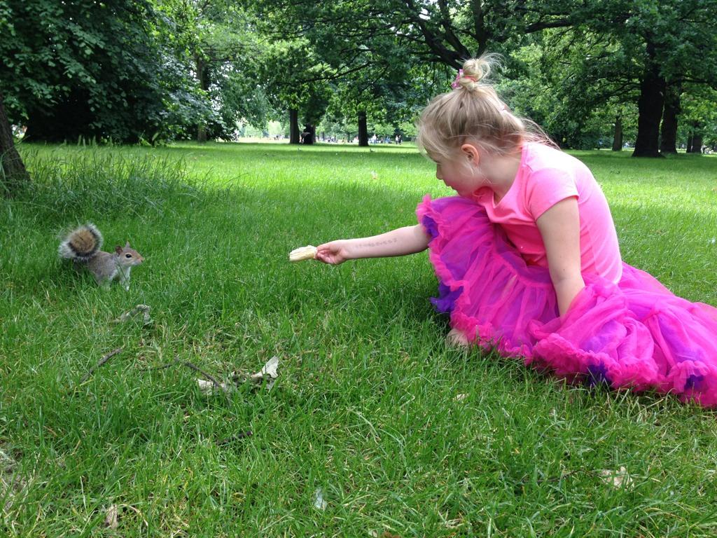 hvem spiser ekorn