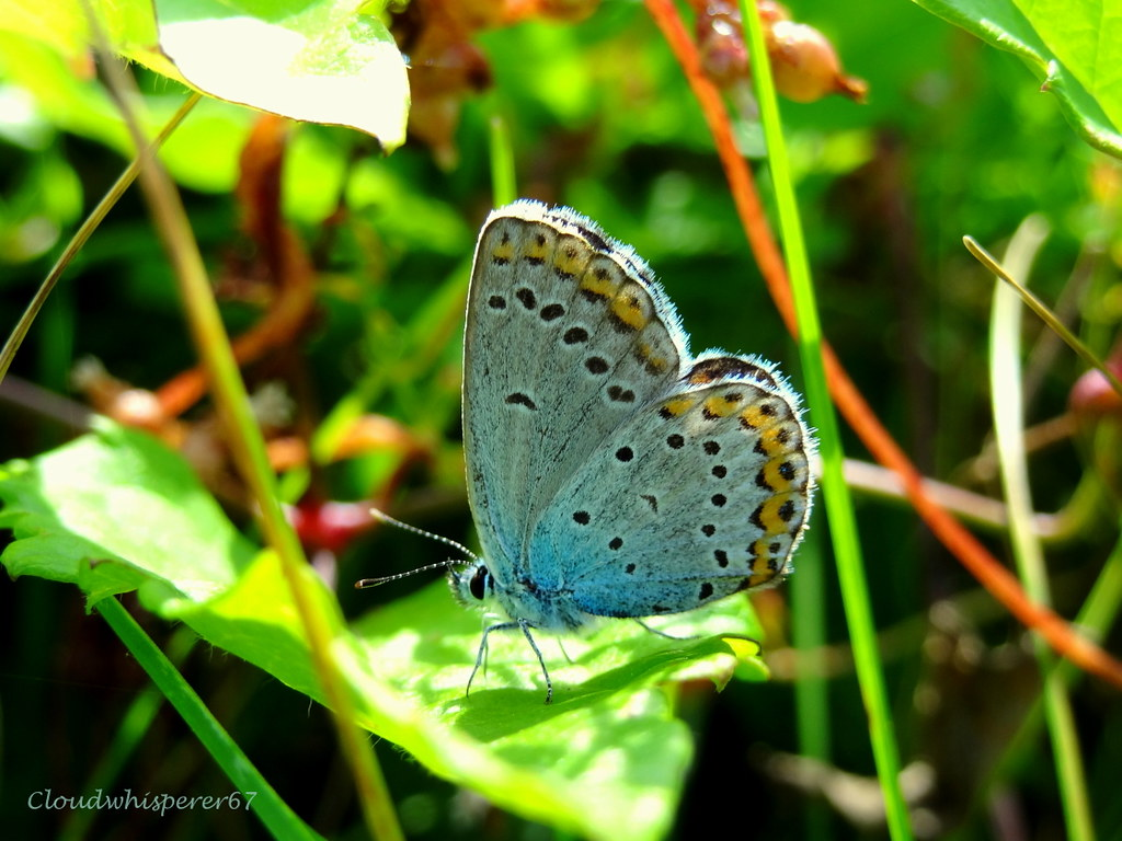 Adorable White & Blue Butterfly