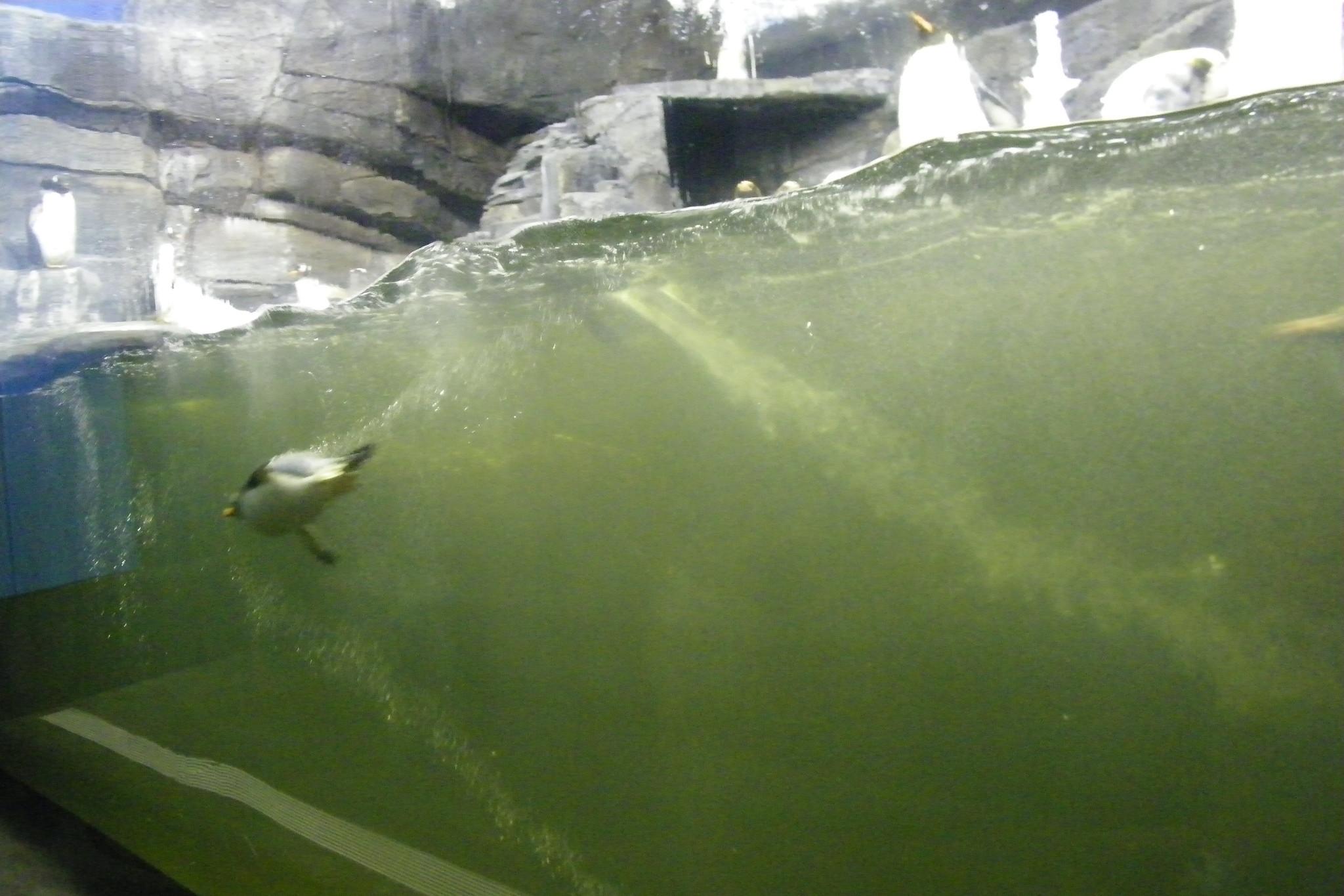 Visit To The Newport Aquarium Newport Kentucky Flickr