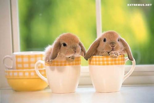 coffee-Bunnies