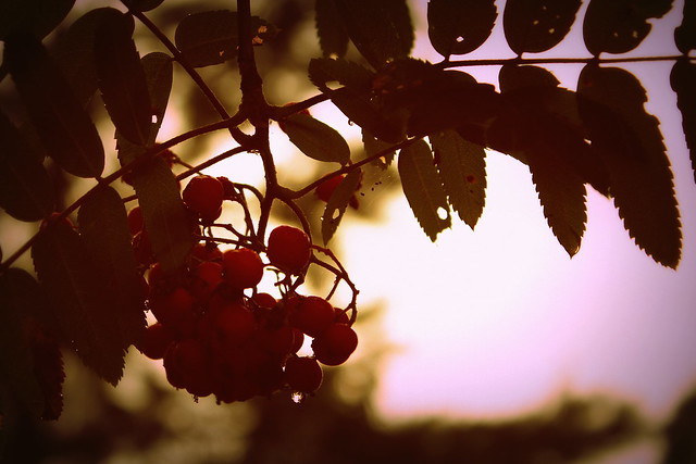 Leipomuksii + luontokuvia 071