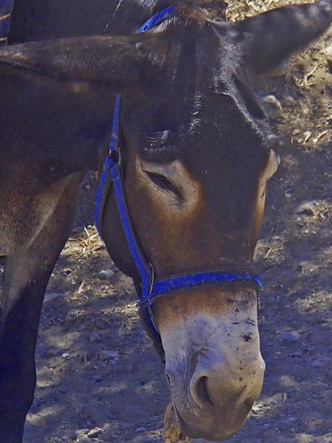 Donkey in Akamas