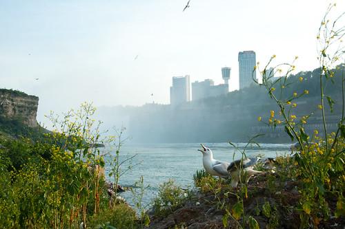 Niagara Falls-19