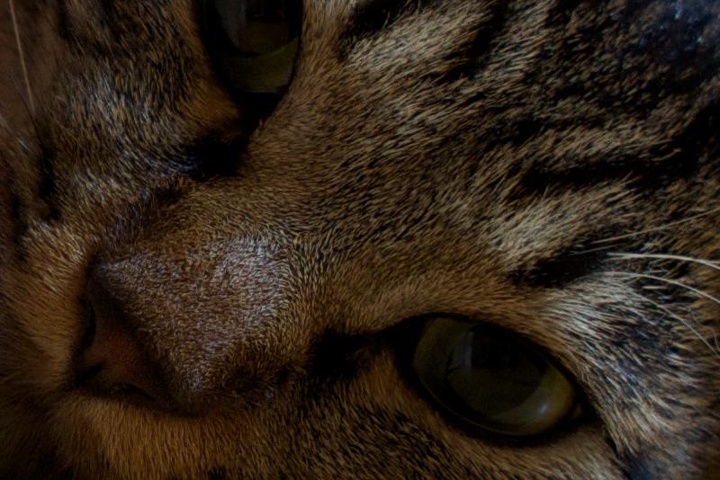 peeping cat SS
