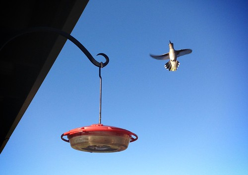Hummingbird migration begins. by ConserVentures