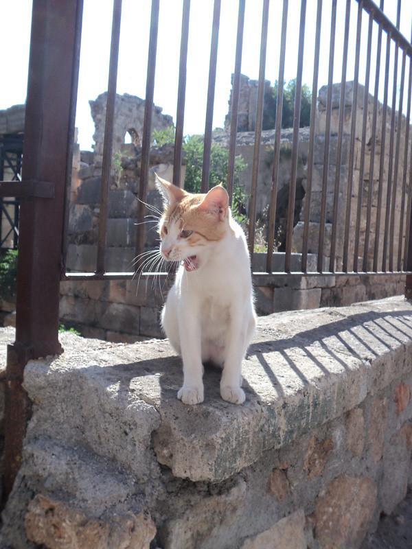 Один котик пришел с нами знакомиться