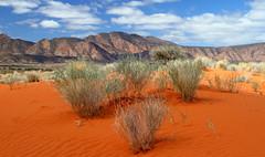 Desert Sands Australia