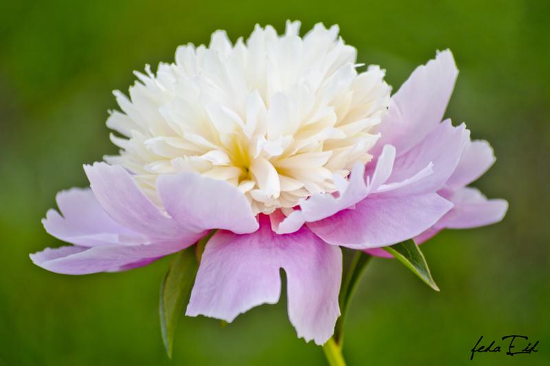 Flower Bright