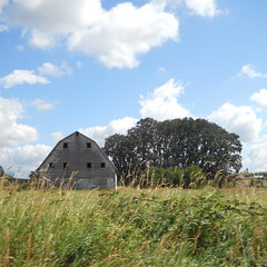 A barn and a small copse of trees