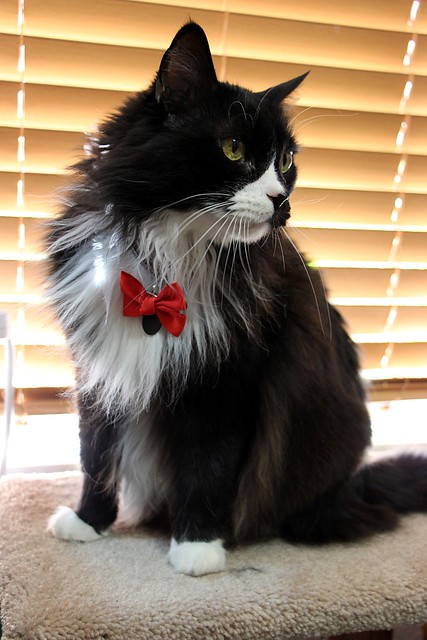 13. Sneakers' Bow Tie