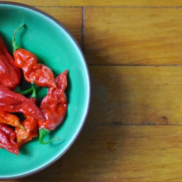 Ghost chili peppers (Naga Bhut Jolokia)
