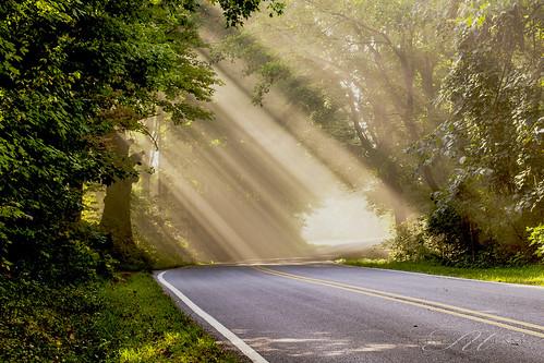 road trees sun sunlight grass fog rays