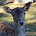 Deer ©kewl