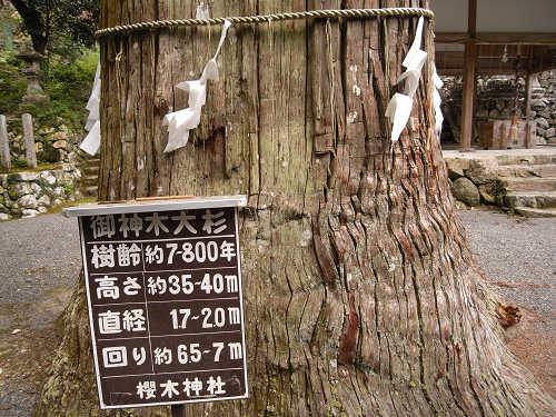桜木神社と象の小川@吉野町-05