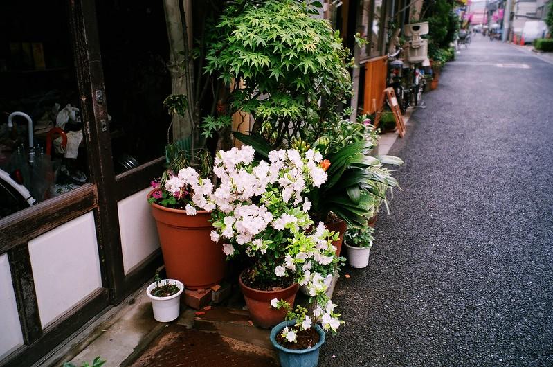 P-fuji-natura_classica-efiniti200-36-0426-019