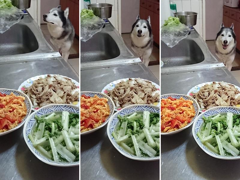 Doggy貪吃狗4盤2
