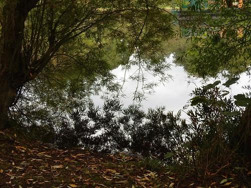 Lea Navigation Reflections