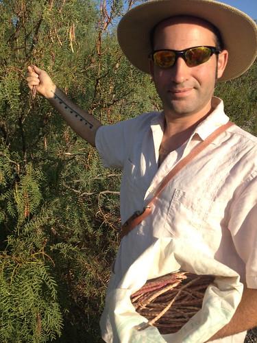 Mesquite Harvest #2
