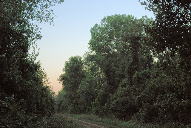 Big Muddy National Fish and Wildlife Refuge, Boone's Crossing Unit, in Chesterfield, Missouri, USA - forest path 2