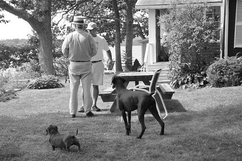 Neighbors and their German Dogs