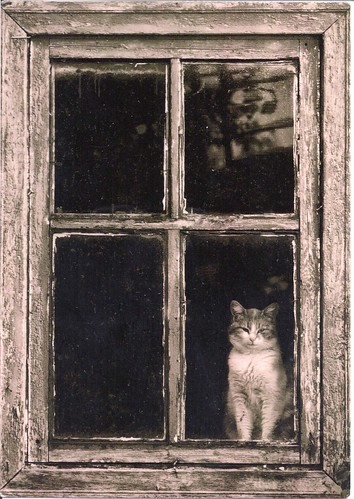 Sweet Cat in the Window