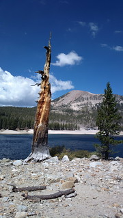 Hiking around Horseshoe Lake, Mammoth Lakes