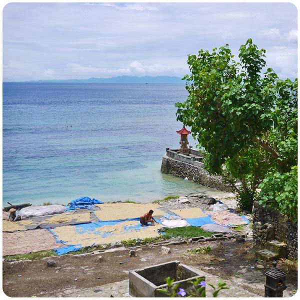Nusa Penida - Champ d'algues