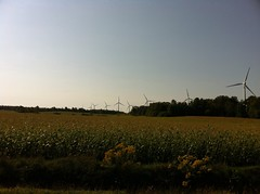 Corn field and wind turbines