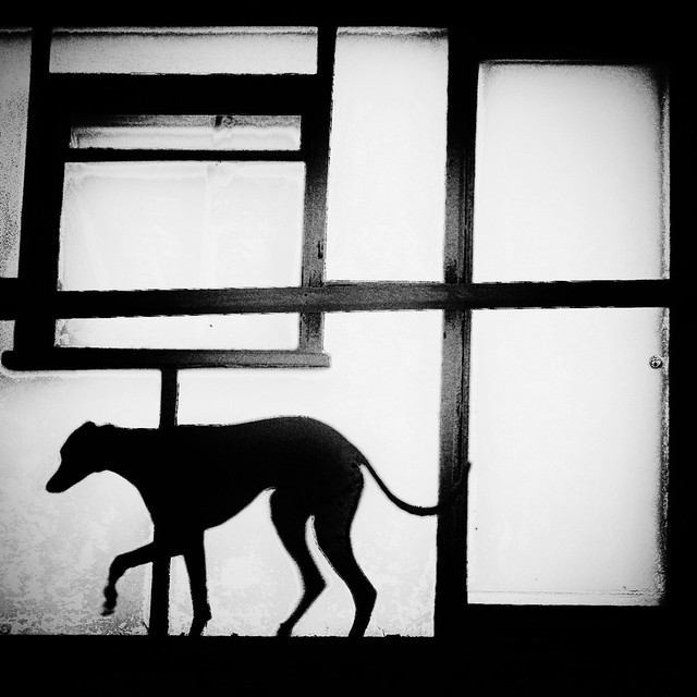 The Little Dog Laughed - Great Examples of Shadows in Street Photography