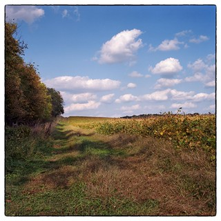 Road Through the Soybean Field - Germantown, MD