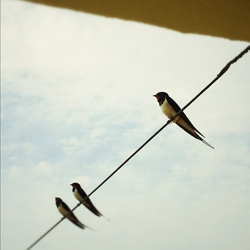 Bedroom Swallows