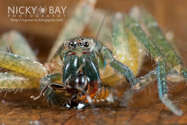 Huntsman Spider (Sparassidae) - DSC_3931