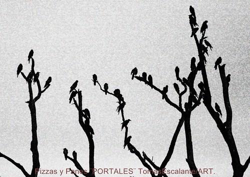 CUERVOS. by Tomasescalante